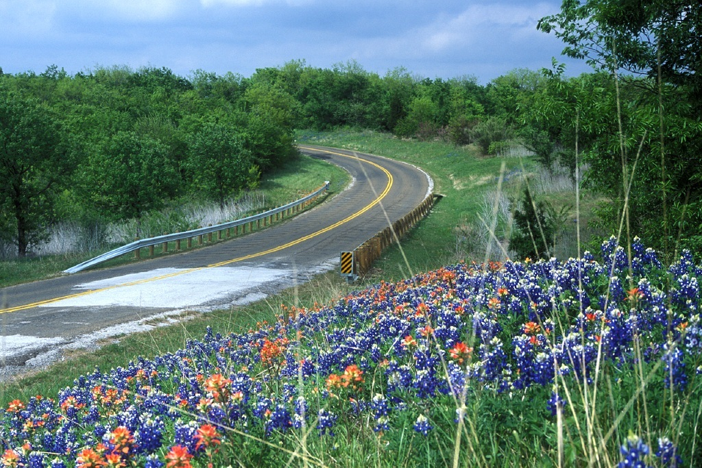 Wildflowers bloom along a rural road. Chase A. Fountain, © Texas Parks and Wildlife Department