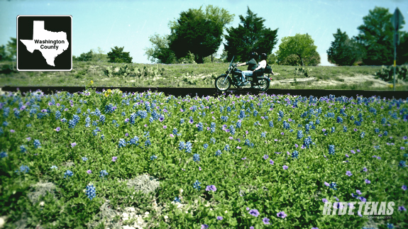 Washington County is not only the birthplace of Texas, but also an excellent wildflower roads destination.