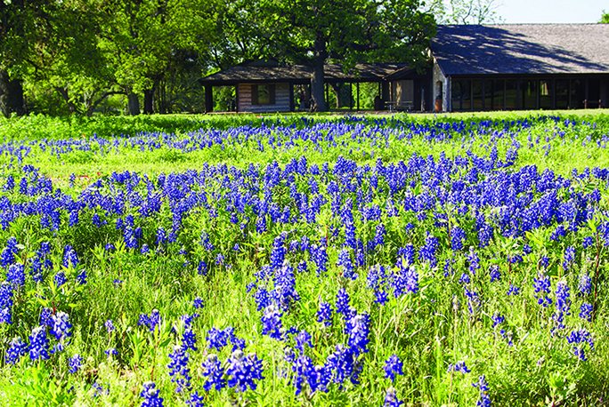 Bluebonnets on Freewheelin' Fredericksburg Ride
